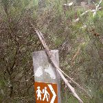 Track marker to Porters Pass (13156)