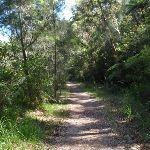 Heading through the bush (133111)