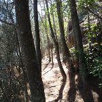 Through the trees (133333)