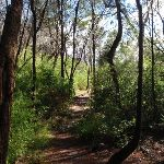Heading through the trees (134227)