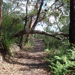Two Creeks track near Ormonde Road track (134704)