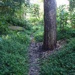 Little Digger track (135898)