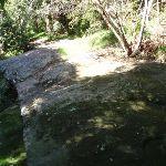 Rockshelf Beside Moores Creek (136105)