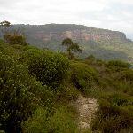 Walls Ledge Track upper trail (13738)