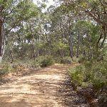 McNicol Service Trail (14200)