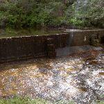 Braeside picnic area dam (14368)