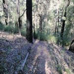 Track near Erskine Creek (144006)