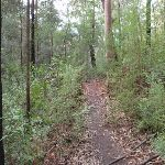 Red Hands Cave Track (145353)