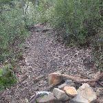 Track down through the bush (146934)