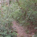 Track in Magdala Gully (147108)