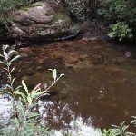 Clear pool in Magdala Creek (147423)