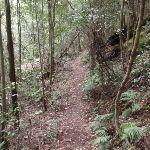 Ferny track (147453)