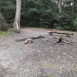 Logs in clearing (147543)