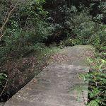 Bridge over the creek (147603)