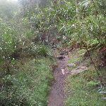 Track beside Glenbrook creek (148062)