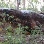 Rock outcrop next to track (148578)