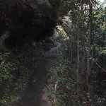 Sassafras Gully Track (148653)