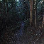 Track through dense forest (148692)