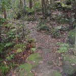 Track down towards Clarinda Falls (149055)