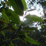 Leaves (149187)