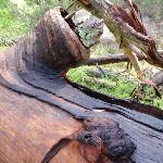 Log fallen on dam (150600)