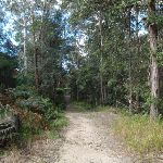 Tall forest in the Berowra Valley Regional Park (152740)