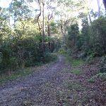 Blackwattle management trail east of Blackwattle Place (152830)