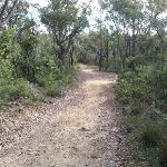 Heading down Stringybark ridge (153364)