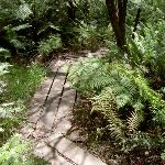 Pope's Glen Track (15367)
