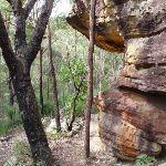 Rocks on the Callicoma Walk (154132)