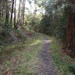 Track along an overgrown management trail (154399)