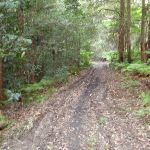 Moist forest and a muddy track (154486)