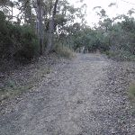 Management trail near the Jungo (154927)