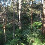 Grass tree on Blackwattle trail (156868)