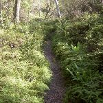 Braeside Track (15793)