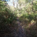 Bush track near Redgum Ave (158128)
