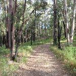 Donovans Forest (159643)