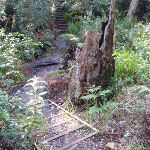 Steps to the creek crossing (164461)