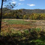 Park Gully wet land (167462)