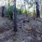 Steep sides make for interesting vegetation (169985)