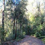 Walking along Simpson Track (170675)