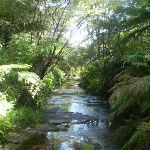 Following Kedumba River (17137)