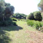 Grassy trail (172065)