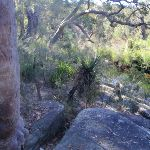 View point of the creek and surrounding bush (172320)
