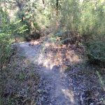 Flat Rock creek track (172335)