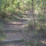 The trail between the Kiosk and Scenic World (17248)