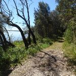 Walking along the edge of Tuggerah lake (175983)