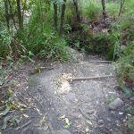 Dirt Path (176985)