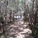 Track near Henry Head (17772)