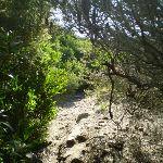Track near Maroubra (18213)